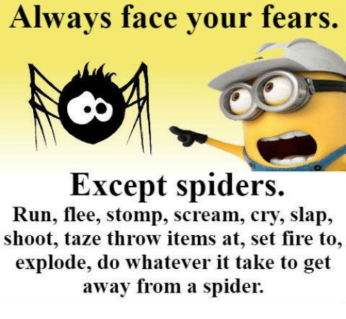 fear of bugs and spiders